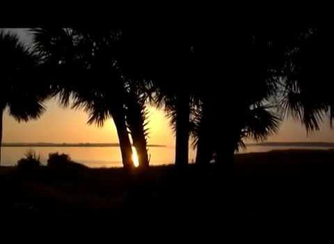 Aerials: Palm Sunrise Georgia Coast